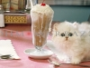 A Cat Smaller Than A Milkshake