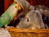 The Parrot and the Hare?