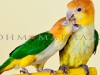 A Parrot Romance in Bloom