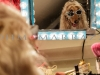 Glamor Queen Dog