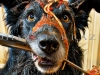 This Dog Loves Spaghetti