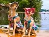 Cute Dogs Dressed Up as Ladies