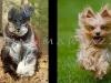 Action Dog Photos