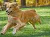 Photo of Dog Running