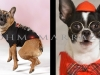 Dogs That Think They're People